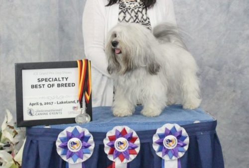 GCH By The Bay Chewbacca @ Treasure Isle